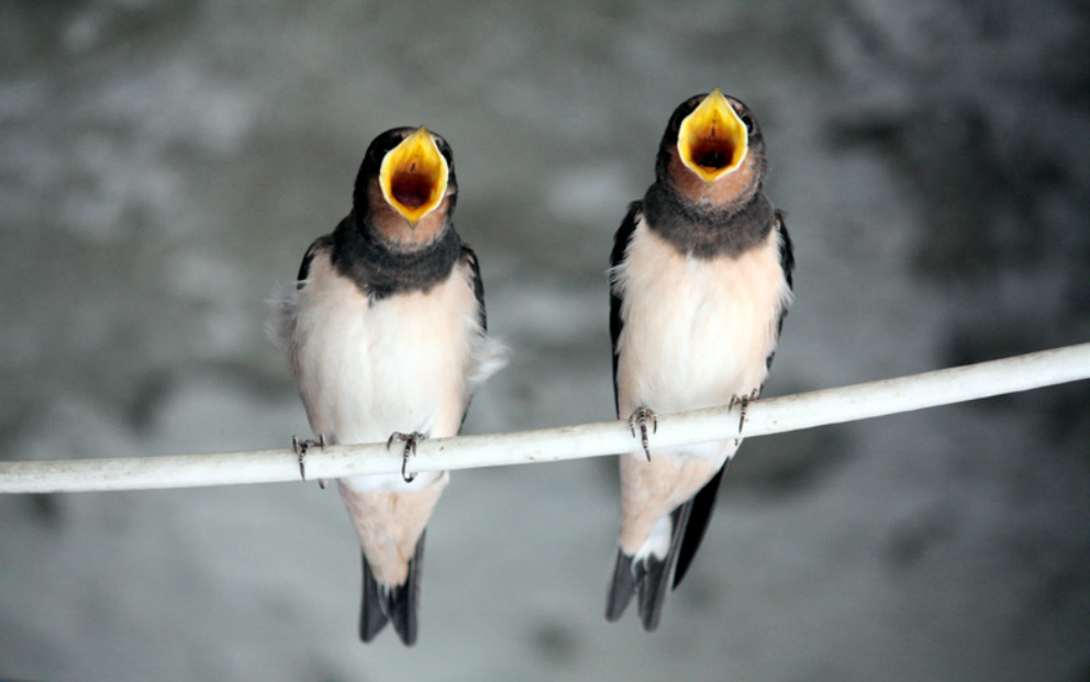Two birds singing